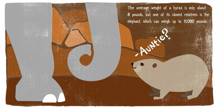 unusual-animals-hyrax.jpeg