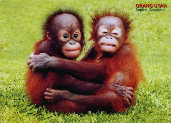 Happy Orangutan Awaren...