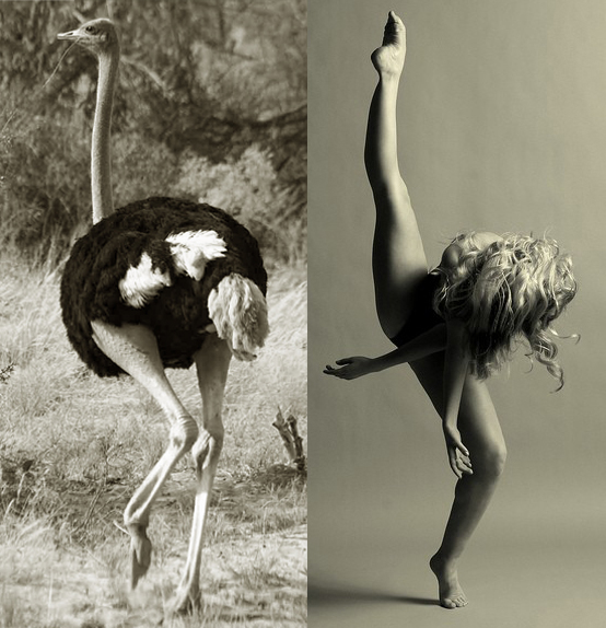dancer ballet ostritch comparison