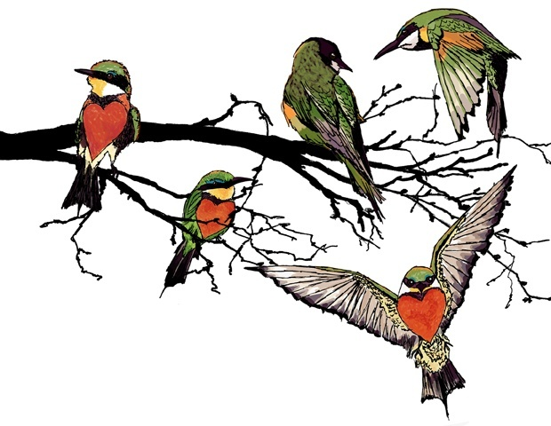 bee-eaters-illustration.jpg