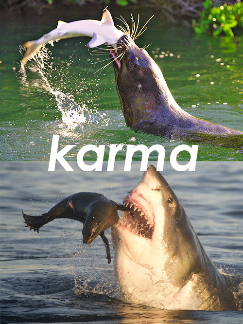 karma-sea-lion-eats-shark.jpg