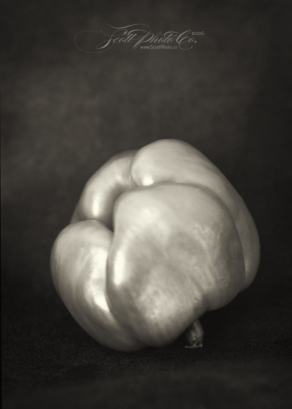 Pepper July 2016 Century Studio Camera 9 + 42cm Heliar + 5x7 Foma 100 + XTOL 1:1 Window light