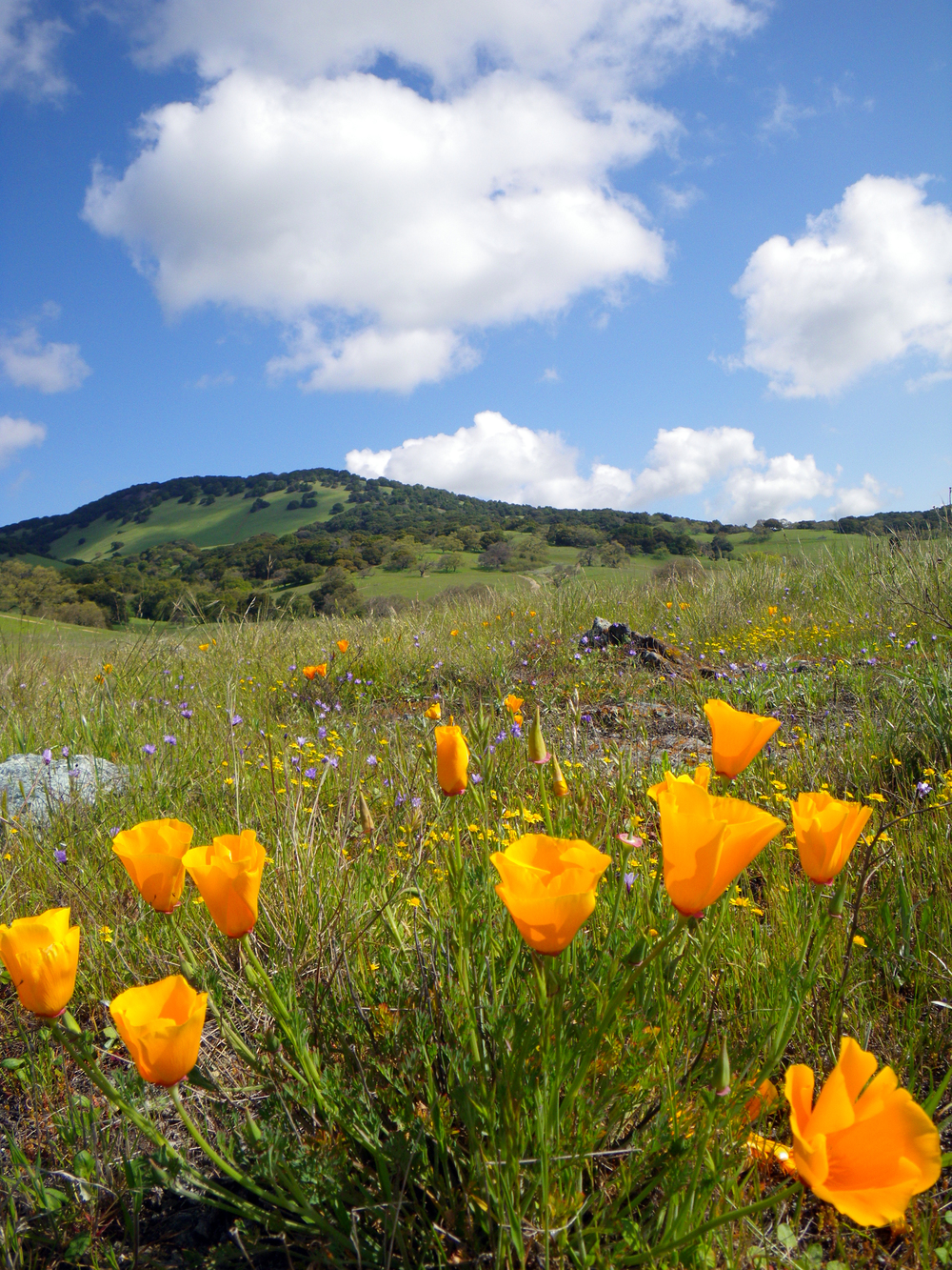 Road to Mount Burdell
