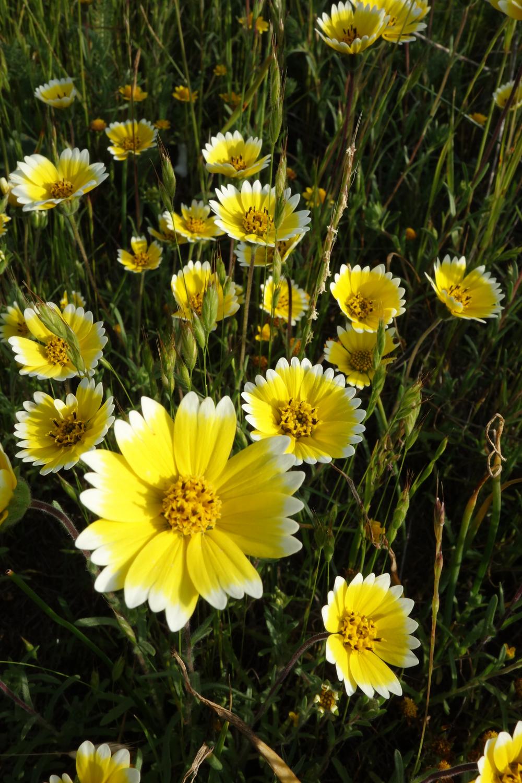 Marin county wildflowers photos