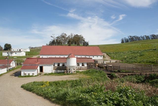 Spring Hill Dairy