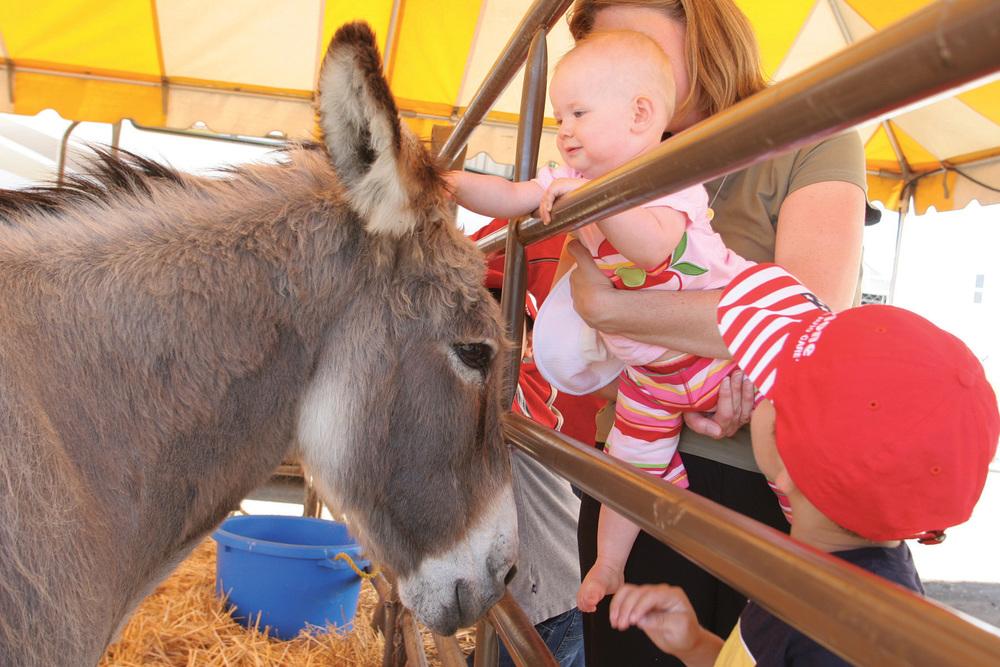 baby&donkey.jpg