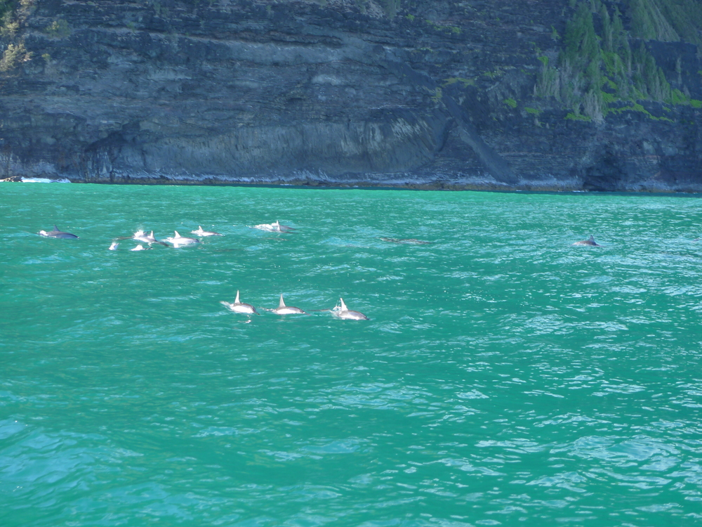Dolphins along the Na Pali Coast