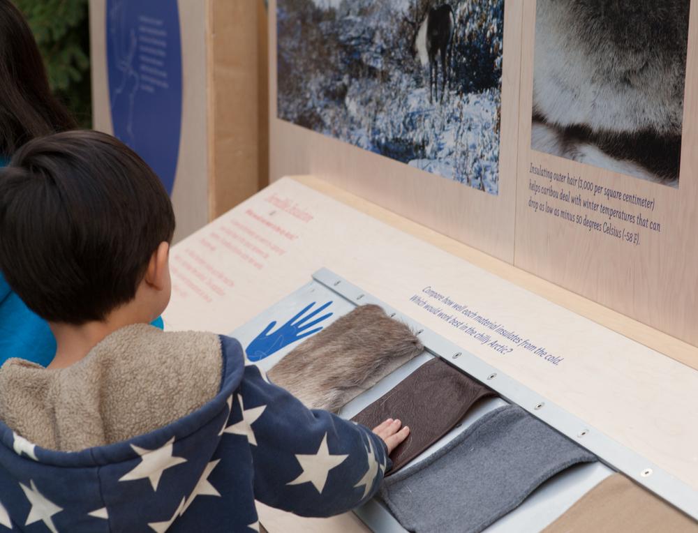 child at fur insulation station_Kathryn Whitney_CAS.jpg