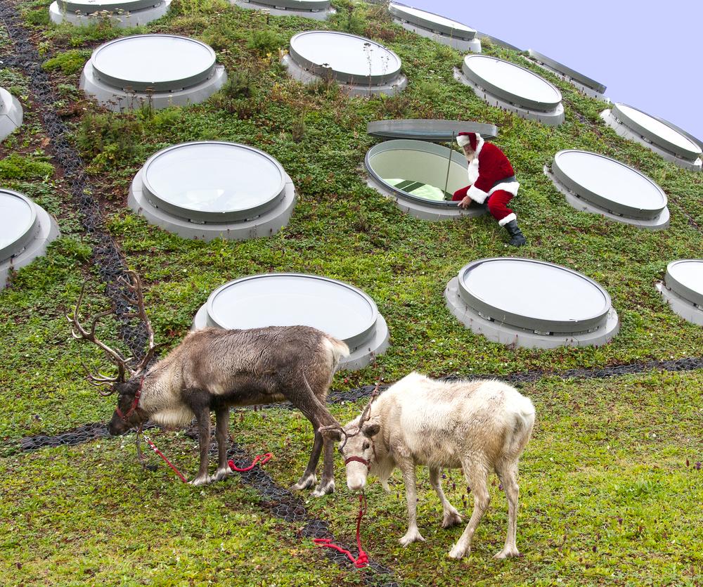 reindeer_roof_CAS.jpg