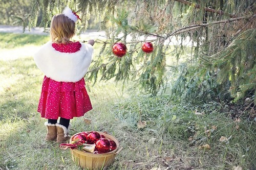 Christmas Tree Lots Farms — Ronnie's Awesome List - Bay Area Christmas Tree Farms