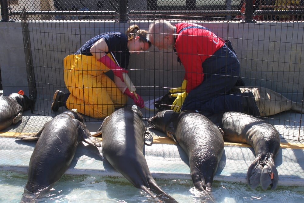 Photo © The Marine Mammal Center
