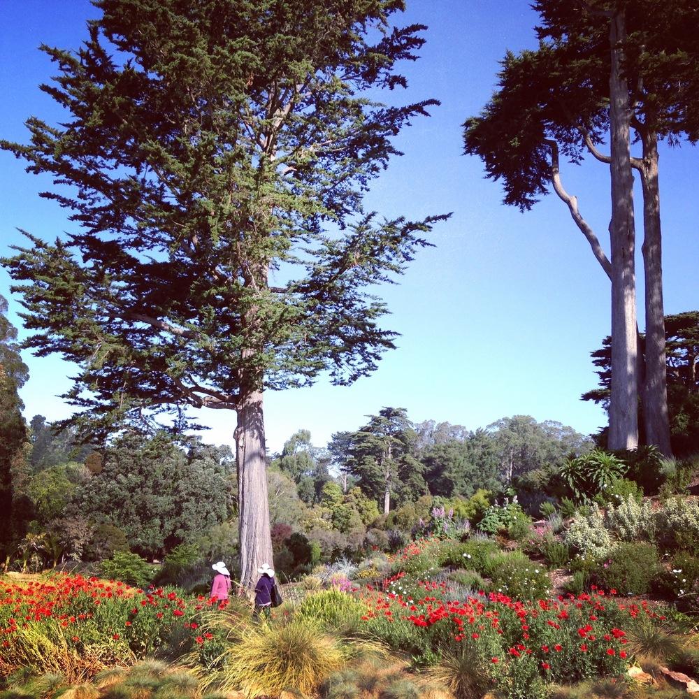 Mediterranean Garden,Brendan Lange