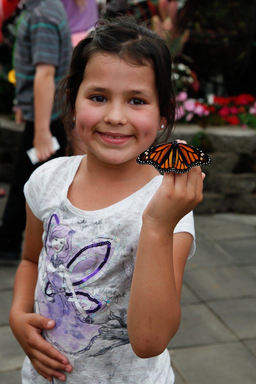 Butterflies2013:3.jpg