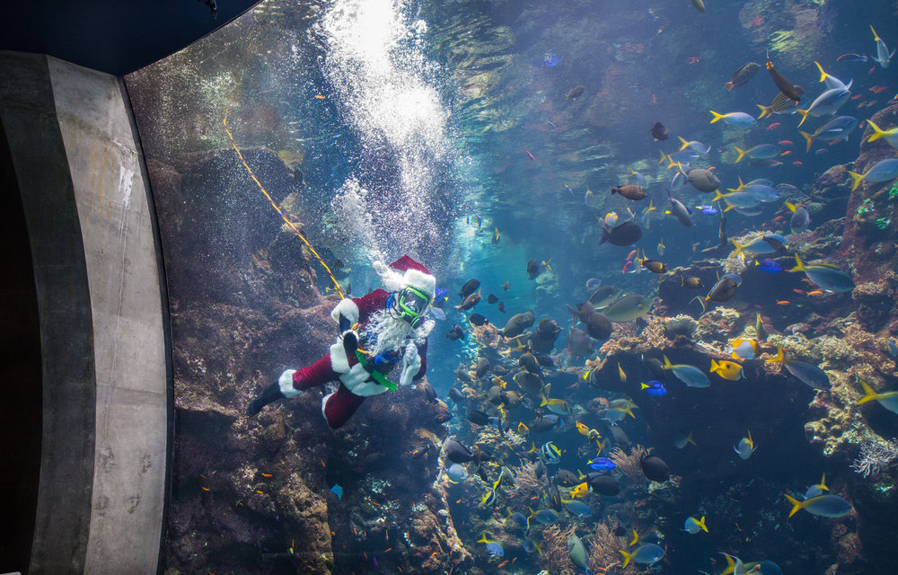 Scuba Santa and presenter_Kathryn Whitney_CAS.jpg