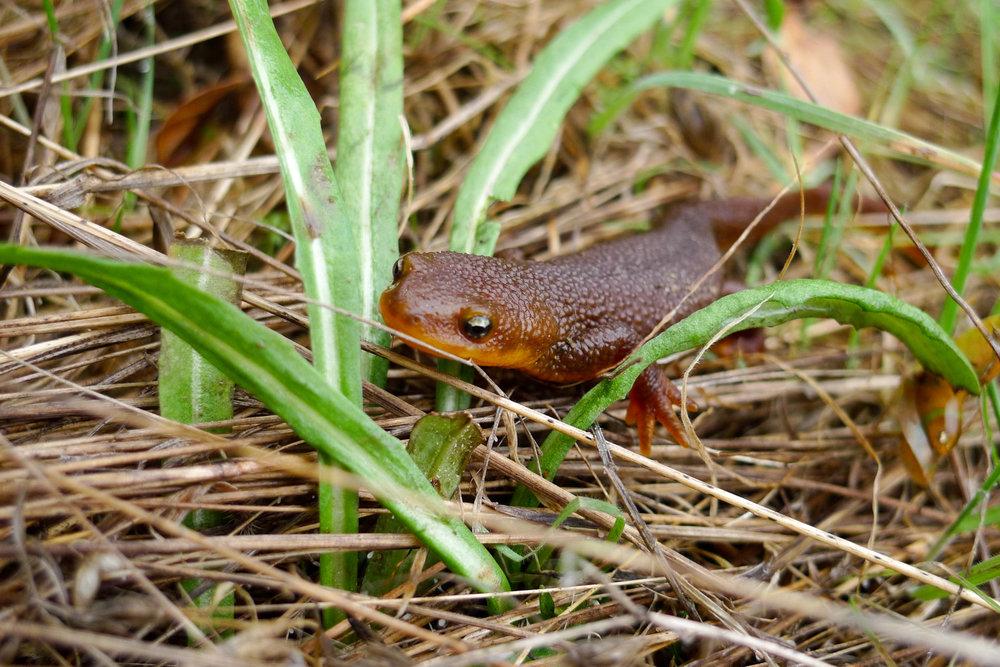 frogmom-27.jpg