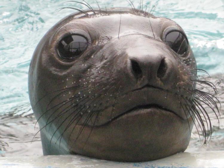 Marine Science Sunday, 10am-5pm, Animals of the Arctic, Marine Mammal Center, Sausalito.