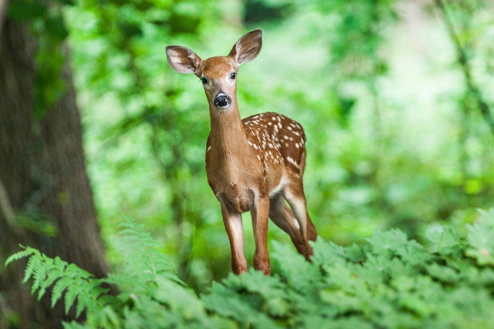 Nature for Kids: Deer Island