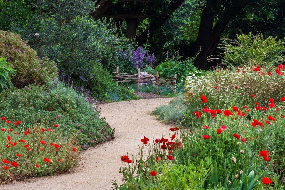 Mediterranean Garden  Saxon Holt