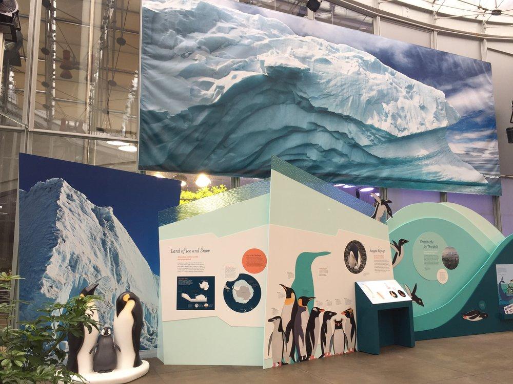 New exhibit 1_Penguins_© 2017 California Academy of Sciences.JPG