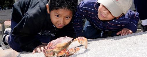 pier-crabbing.jpg