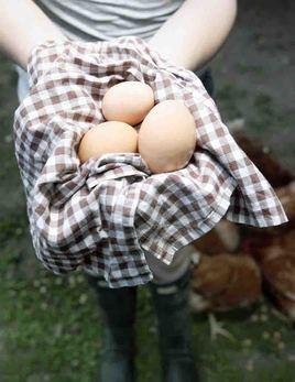girl with eggs 800px.jpg