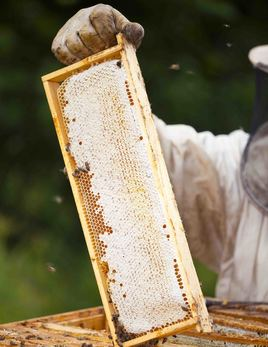 beekepper with hive frame.jpg