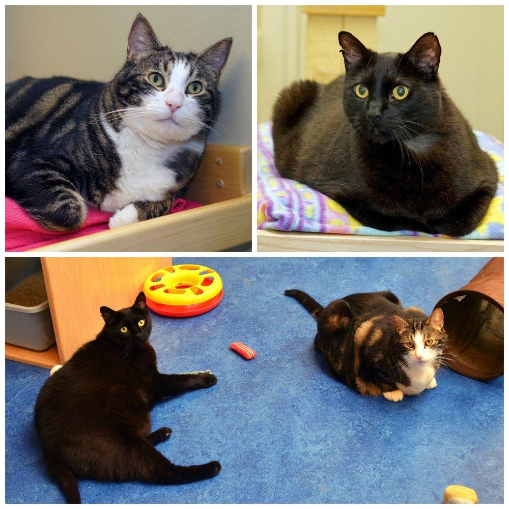 Adrian & Cutie Bonded Kitties Collage.jpg