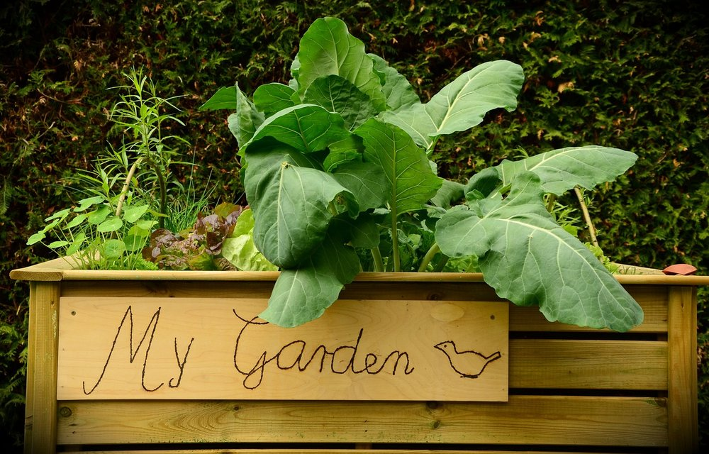 garden-1427541_1280.jpg