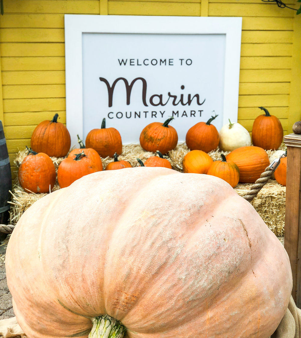 Giant Pumpkin Contest - Throughout the day the Marin County Mart will be accepting guesses for the weight of our 3 giant pumpkins - winner gets a prize!