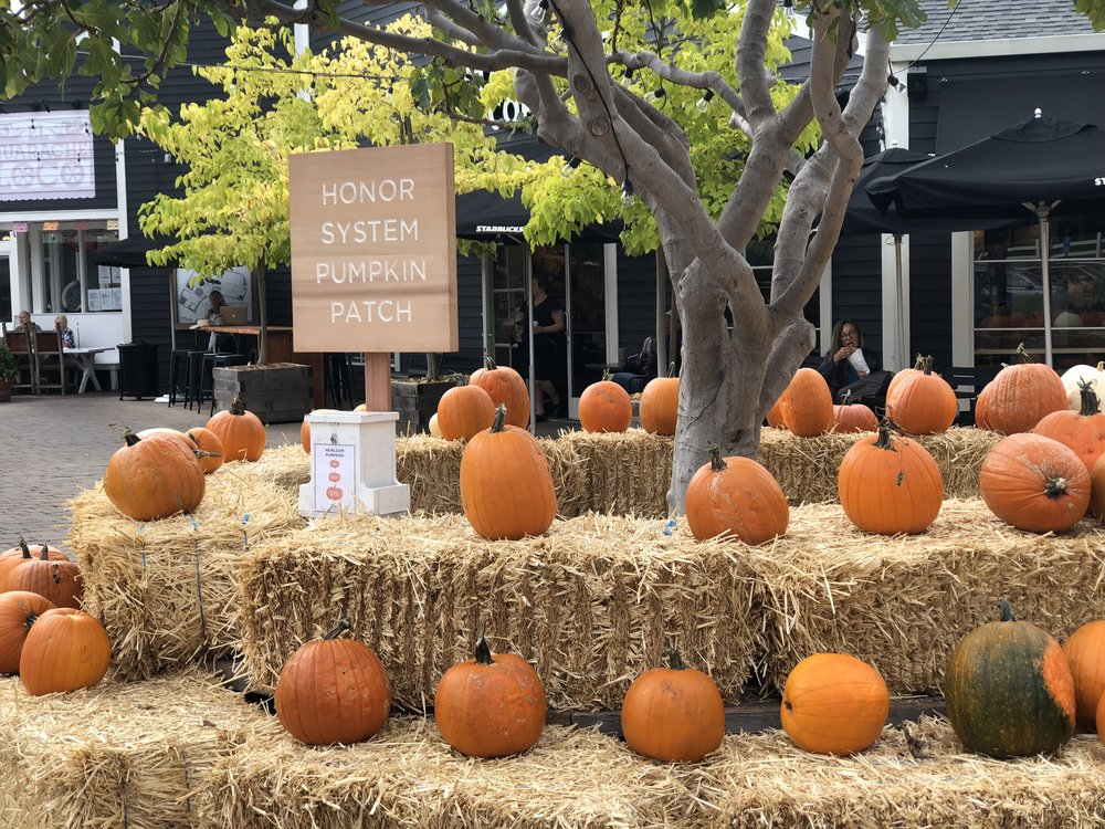 Honor System Pumpkin Patch - To keep things freaky & fun, there will also be plenty of family-friendly activities including pony rides, face painting, Halloween crafts, make-your-own caramel apples, and all the fun you can have in the honor system Pumpkin Patch!