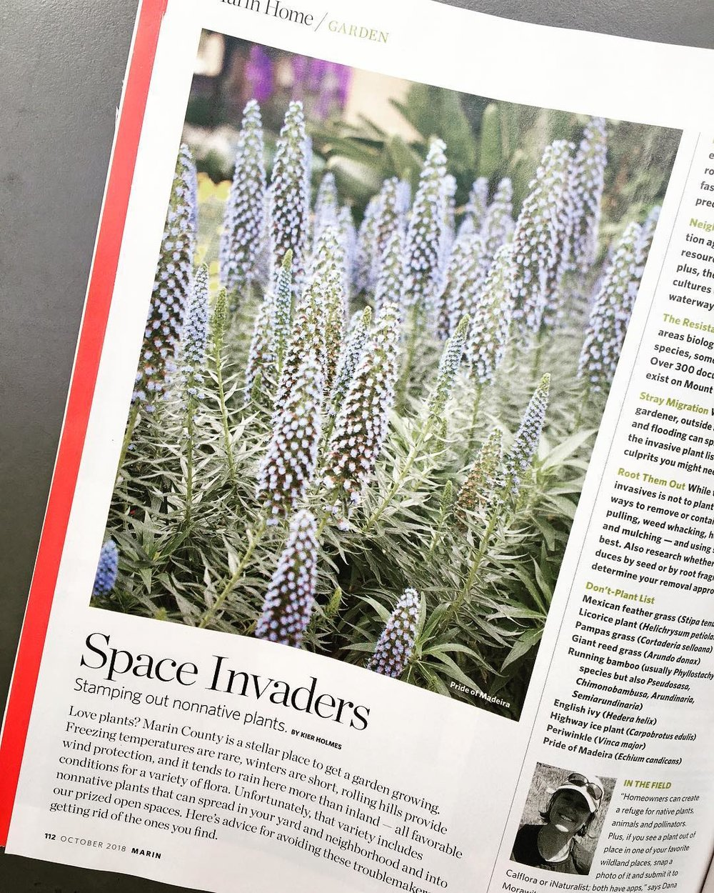 Native Plants - Today consider choosing more native plants and less invasive plants. In Marin Magazine I write about this important topic: Space Invaders. In the article, I list top Marin invasive plants and discuss removal ideas. Please check it out to learn more and to help stop the spread of invasive non native plants into our prized open spaces. These plant bullies can cause environmental and economic harm and by avoiding and removing these invaders you are helping protect Marin's prized beauty. #marincounty #littlethings #littleactsbigchange#invasiveplants #plants #nativeplants #gardening #smartgarden #instagood #freelancewriter