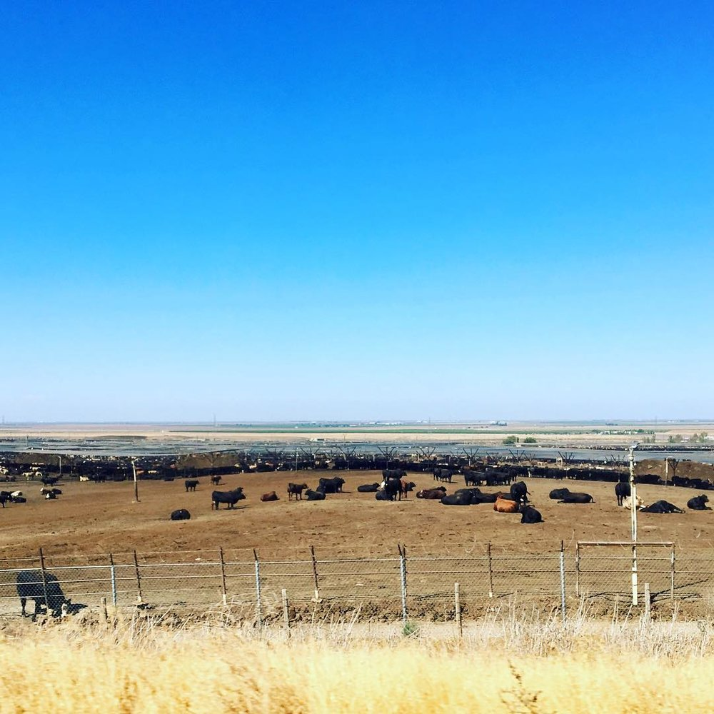 Eat Less Meat - Zooming down I 5 the other day and seeing this massive field filled with cattle (and mistakingly rolling down my window and letting in the repulsive cow odor) reminded me to encourage all meat-eaters to go meat-free for at least one day a week. Cows release methane which is more potent than CO2 as a greenhouse gas, capturing more of the sun's radioactive force. According to the Earth Day Network, if over the course of a year you ate one less burger a week it would equal taking your car off the road for 320 miles. All this meat comes at a price to our planet. #earthdaynetwork #littleactsbigchange #littlethings #meatlessmonday #goveggie #cowfarts #savetheplanet #itstartswithyou 🐄