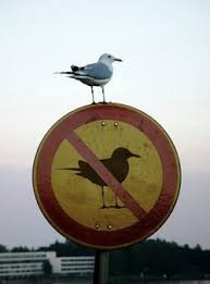 rulebreaker bird