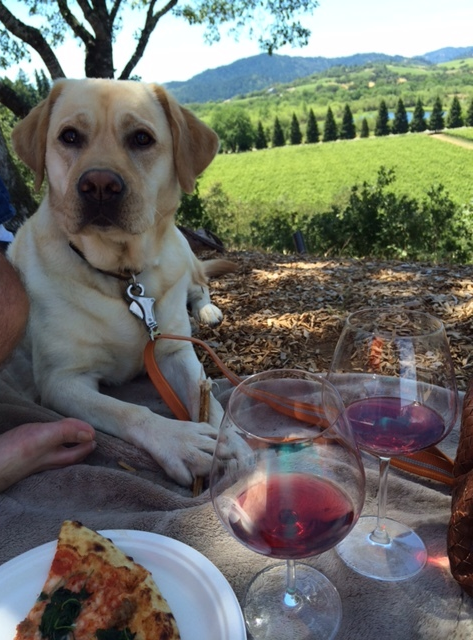 Hudson enjoying a picnic with Pizza + Pinot at the beautiful Copain property.