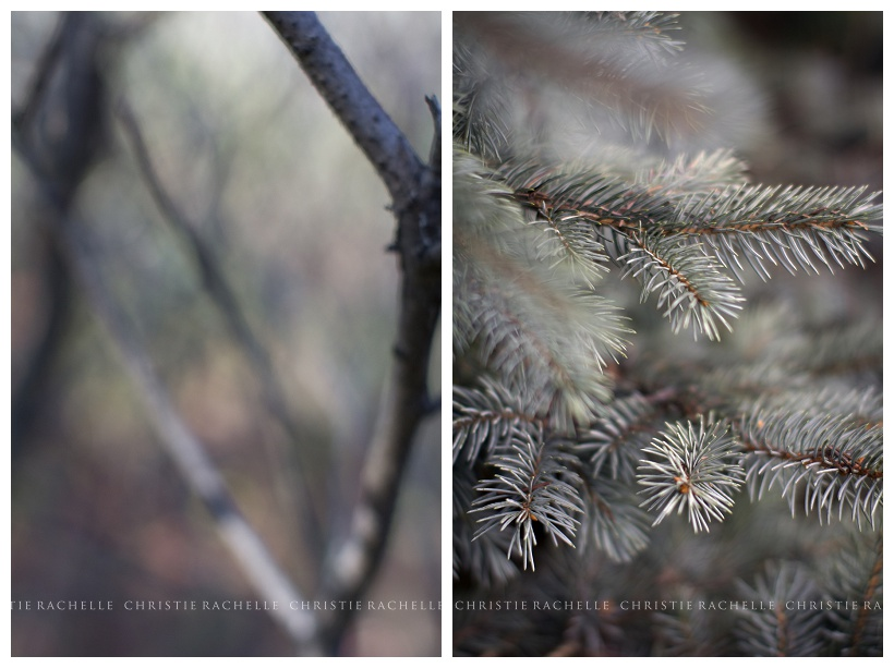 pine-tree-branch-alimagnet-park