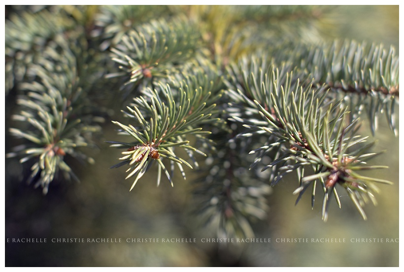 pine-needles-alimagnet-park