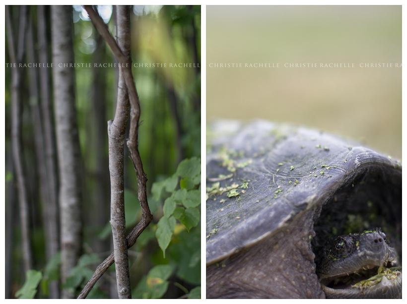 turtle-alimagnet-park-branch