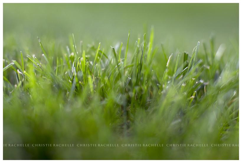 grass-alimagnet-park