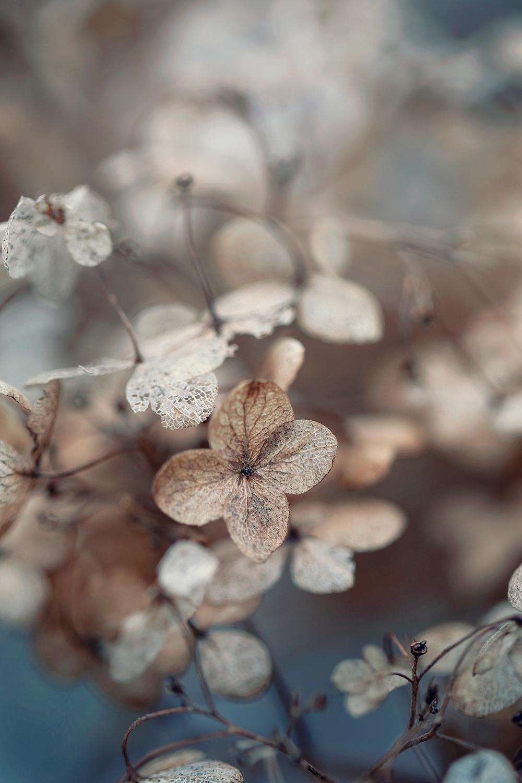Nature__0139.jpg