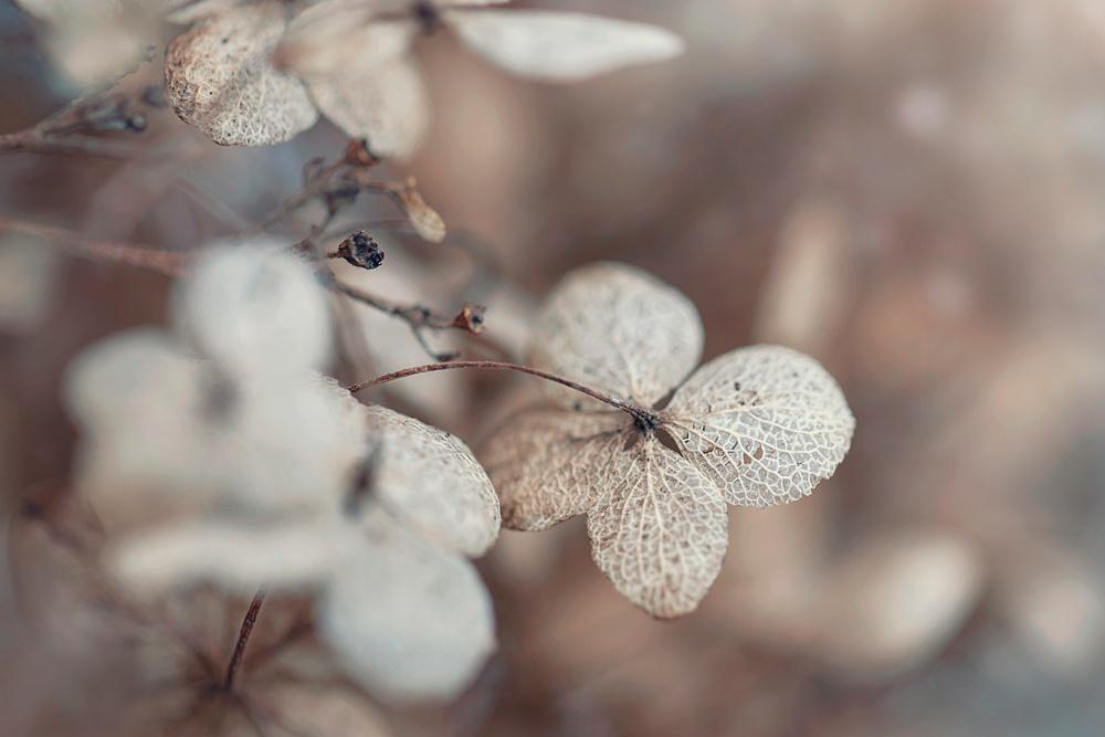 Nature__0144.jpg