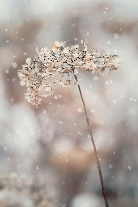 Nature__0141.jpg