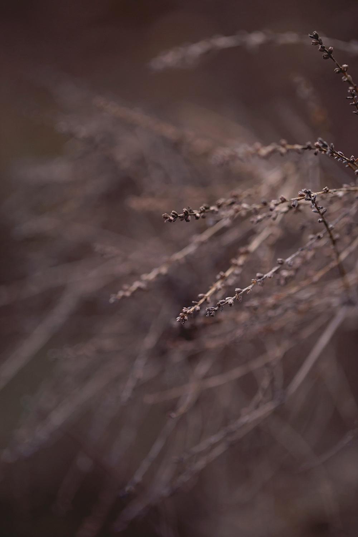 Nature__0122.jpg
