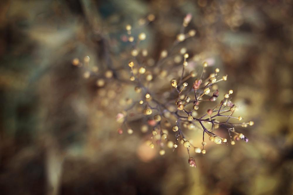 Nature__0116.jpg