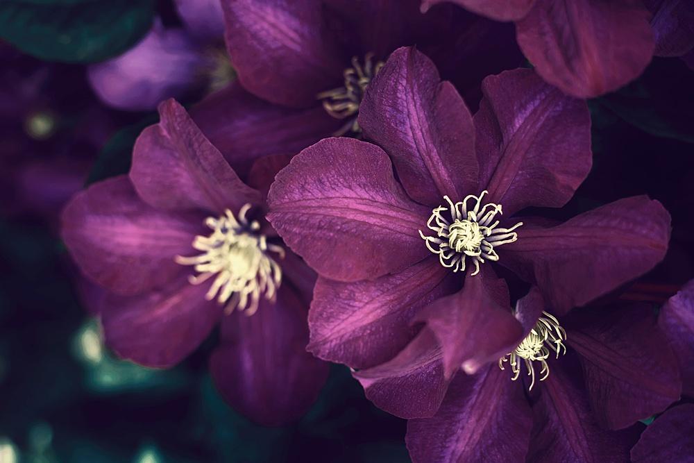 Nature__0091.jpg