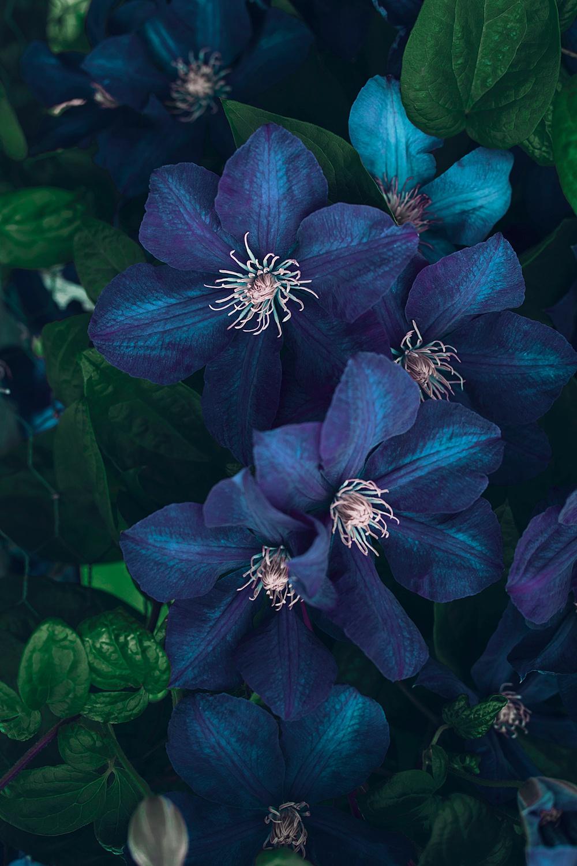 Nature__0019.jpg