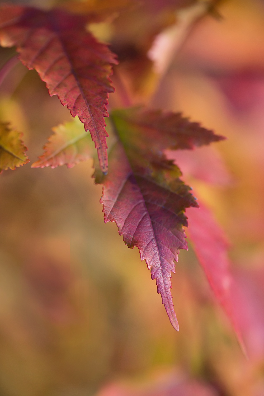 Nature__0095.jpg