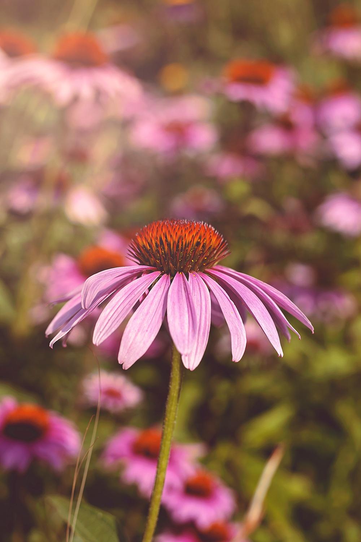 Nature__0136.jpg