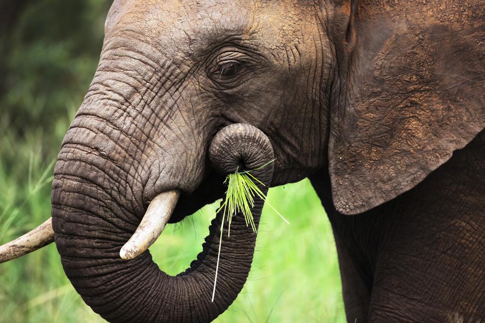 elephant-on-plate