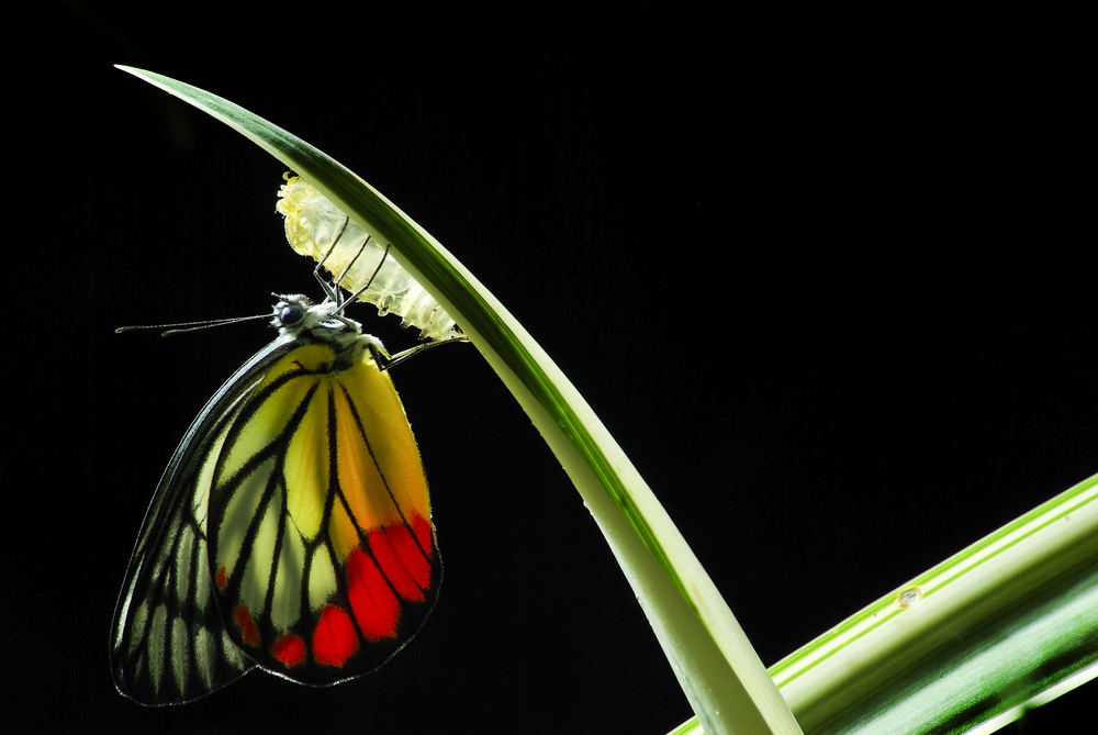 Butterfly-Transformation