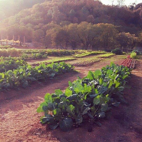 Nice pic of the farm.jpg